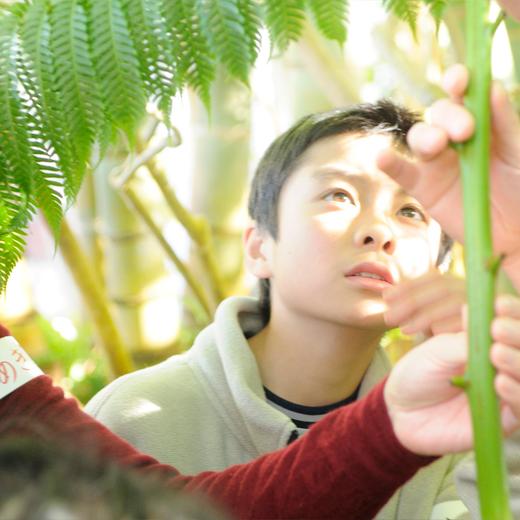 皆でシダの葉っぱに触っている写真