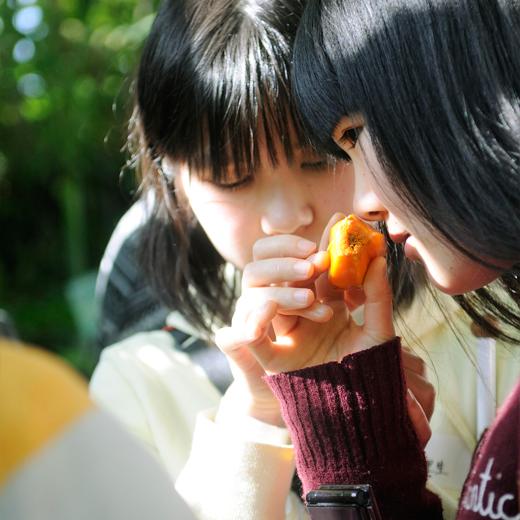 タコの木の実のにおいを嗅いでいる少女達の写真