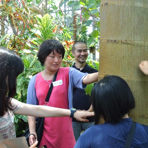 ヤエヤマヤシの幹を触る皆の写真