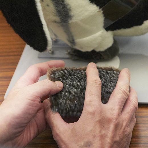 実際のペンギンの羽にさわる手