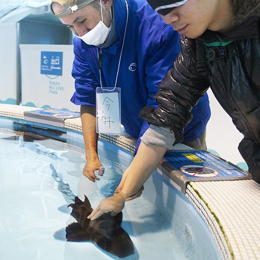 水族園の方に誘導され、プールの中の生きた鮫に手を伸ばしている