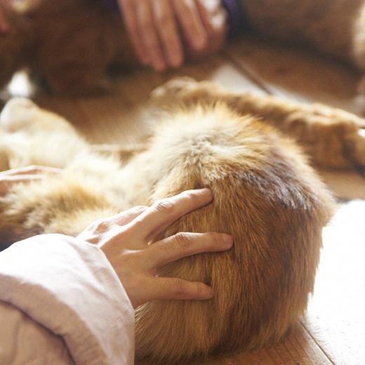 狐の毛皮にさわる手